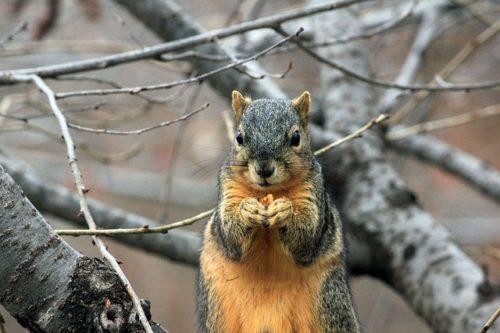 squirrel-241521_640