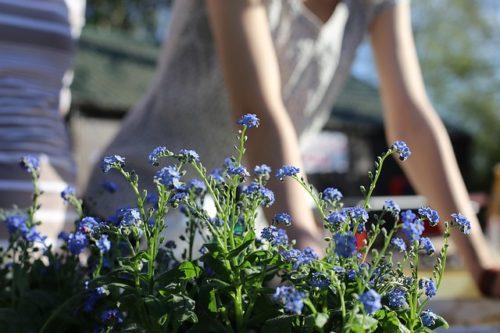 spring-garden-1219823_640