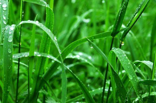 grass-932271_640