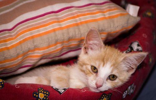 kitten-1056659_640